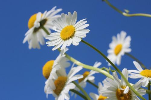 Med förhoppning om blå himmel och fina blomster